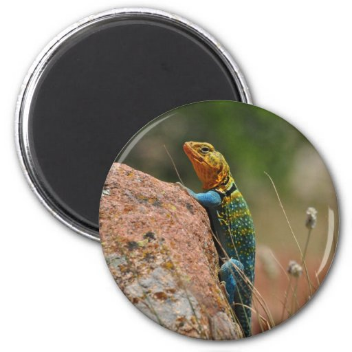 Colorful Lizard Magnets