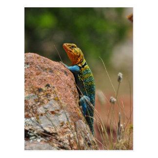 Colorful Lizard Postcards