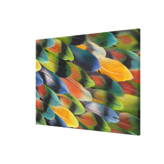 Colorful Lovebird Feather Design Canvas Print
