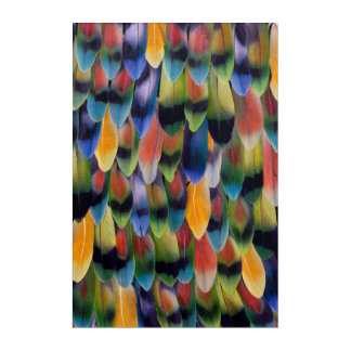 Colorful lovebird parrot feathers acrylic print