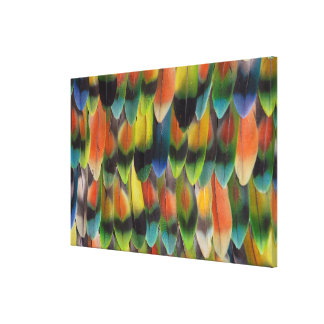 Colorful Lovebird Tail Feathers Canvas Print
