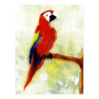 Colorful Macaw Bird Art Postcard