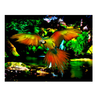 Colorful Macaw Postcard