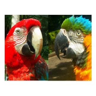 Colorful Macaws, Trinidad Postcard