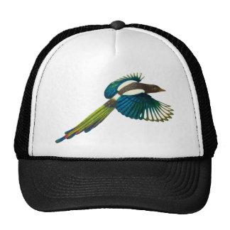 Colorful Magpie Bird, Vintage Illustration Hat