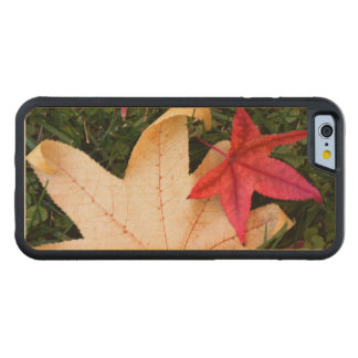 Colorful Maple Leaf Carved Maple iPhone 6 Bumper Case