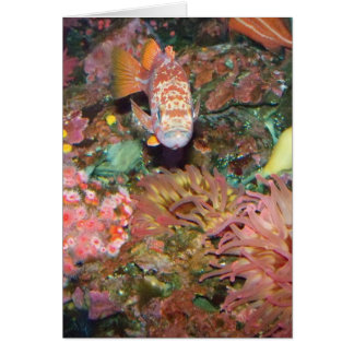 Colorful Marine Life Card