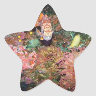 Colorful Marine Life Star Sticker