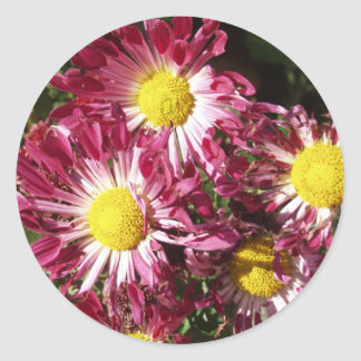 colorful mums round stickers