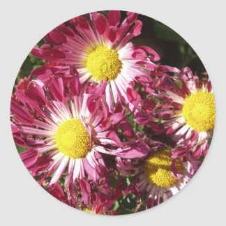 colorful mums stickers