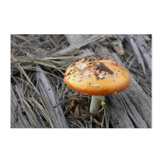 Colorful Mushroom Busting Through Pine straw Photo Acrylic Wall Art
