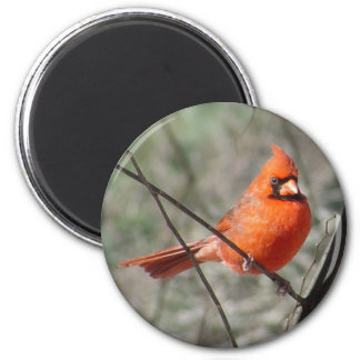 Colorful Northern Cardinal Magnet