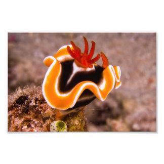 Colorful Nudibranch Photo Print