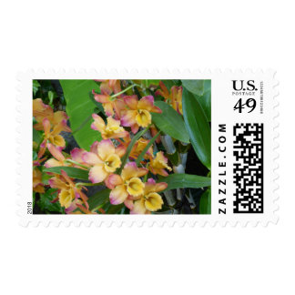 Colorful Orchid Postage Stamp