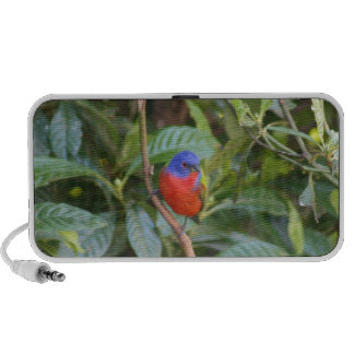 Colorful Painted Bunting Bird Speaker
