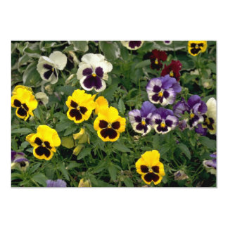 Colorful pansy flowers 13 cm x 18 cm invitation card