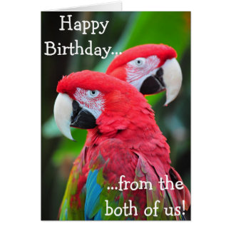 Colorful parrots birthday greeting card