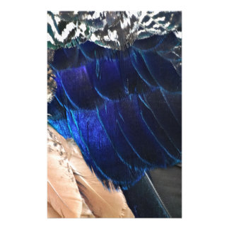 colorful peacock feathers stationery
