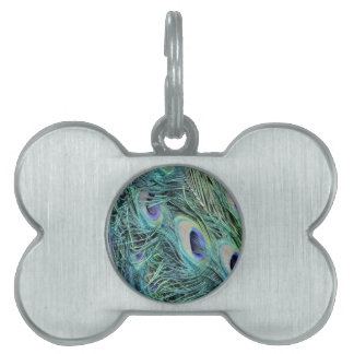 Colorful Peacock Pet ID Tag