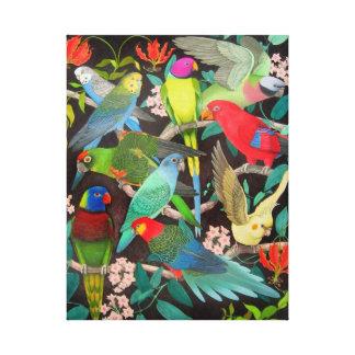 Colorful Pet Parrots Wrapped Canvas Canvas Prints
