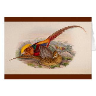 Colorful pheasant card