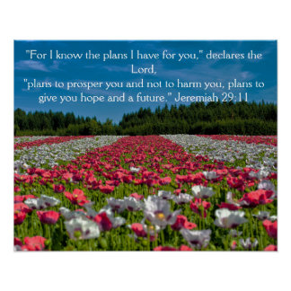 Colorful Poppy Field Photo Bible Verse Poster