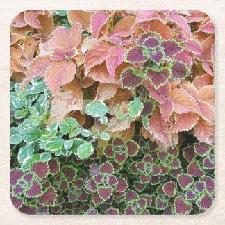 Colorful Rainbow Coleus Plants Photograph Square Paper Coaster