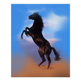 Colorful Rearing Black Horse Blue Sky Poster