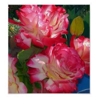 Colorful Red Roses Poster