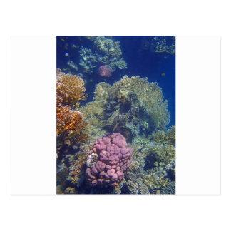 colorful red sea postcard