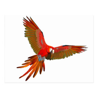 Colorful Scarlet macaw fly art Postcard