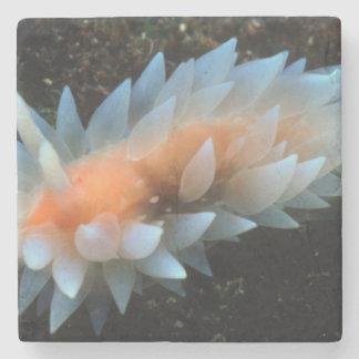 Colorful Sea Slug Sitting On The Surface Stone Coaster
