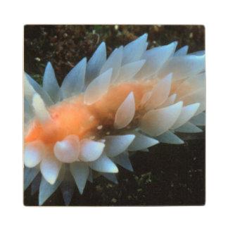 Colorful Sea Slug Sitting On The Surface Wood Coaster