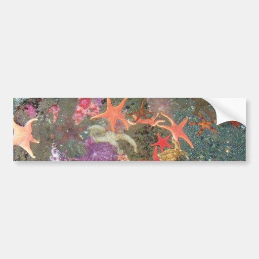 Colorful Sea Stars Banners Bumper Stickers