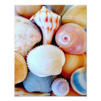 Colorful Seashell Collection Photo