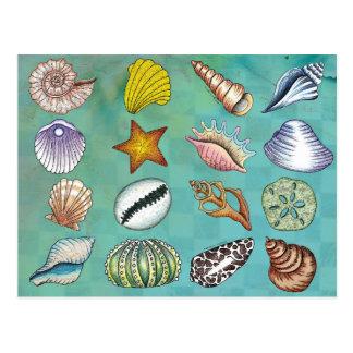 Colorful Seashell Postcard