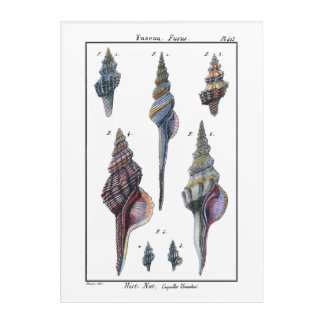 Colorful Seven Seashells Acrylic Print