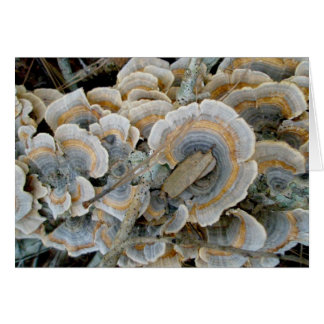 Colorful Shelf Fungus OBX Note Card