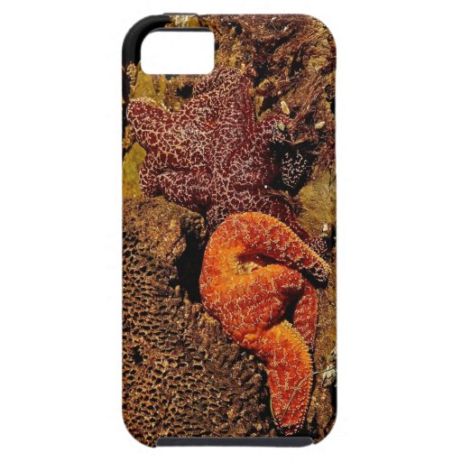 COLORFUL STARFISH ON THE CALIFORNIA COAST iPhone 5 CASES