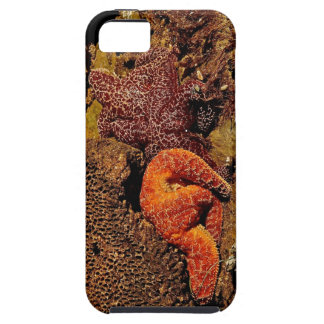 COLORFUL STARFISH ON THE CALIFORNIA COAST CASE FOR THE iPhone 5
