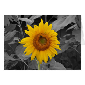 Colorful Sunflower Greeting Card
