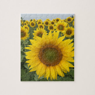 Colorful Sunflowers Jigsaw Puzzle
