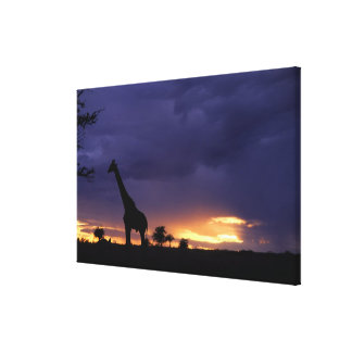 Colorful sunset late afternoon image of safari gallery wrap canvas