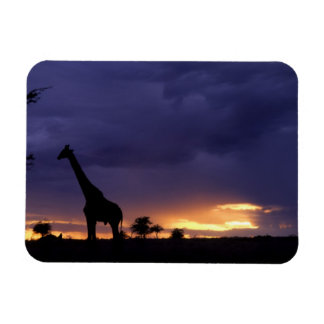 Colorful sunset late afternoon image of safari rectangular photo magnet