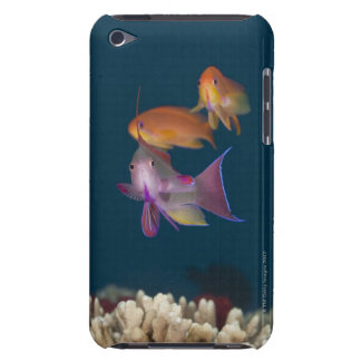 Colorful tropical Anthias, Underwater Life iPod Touch Case