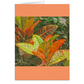 """""""Colorful Tropical Plants"""" Note Card"""