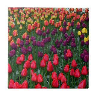 Colorful tulip flower garden tile