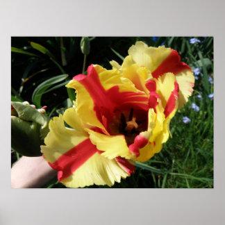 Colorful Tulip Macro Print