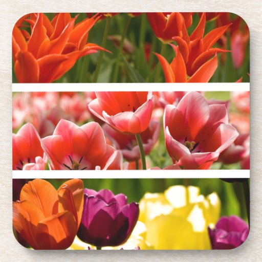 Colorful Tulips Beverage Coasters