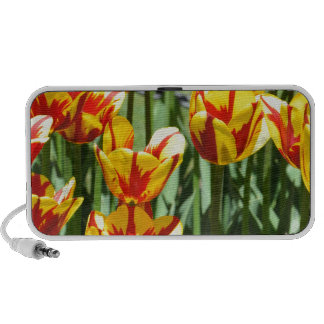 Colorful Tulips iPod Speakers